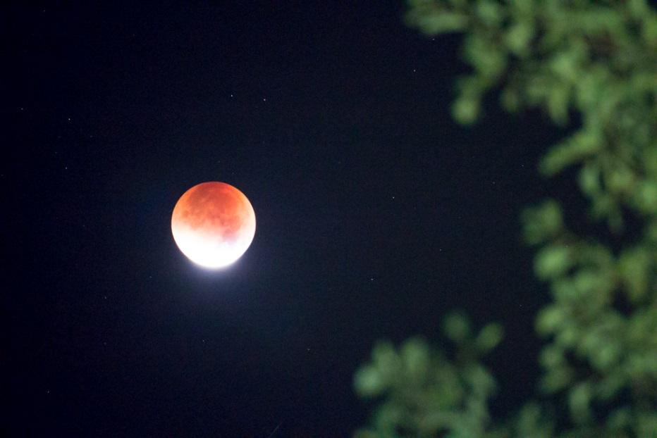 Mondfinsternis, hinter Bäumen