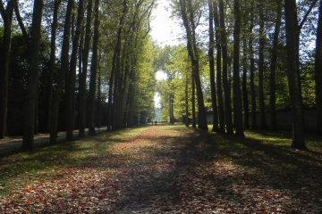 Laub und Bäume in Versailles